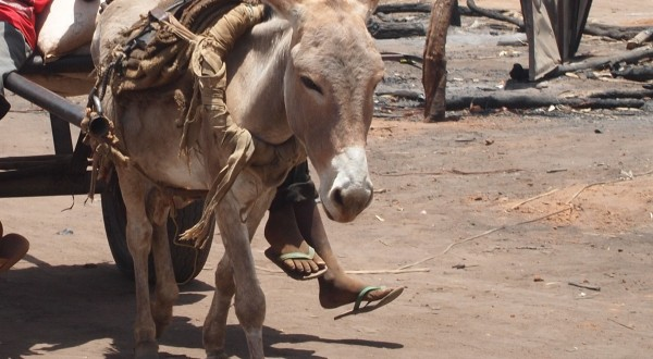 Donkey Hire for Project Monitoring